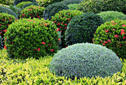 Best landscaping with shrubs and bushes designs ideas pictures and diy plans