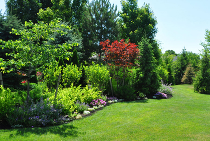 Pictures of Shrubs for Landscaping 2016 Design Plans