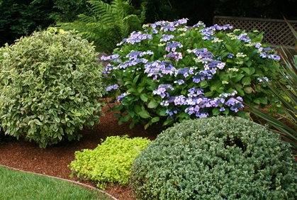 Top 2016 types of shrubs and bushes landscape design ideas photos and ...