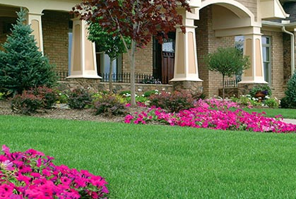Pictures of shrubs and bushes for landscaping pictures designs ideas and photos