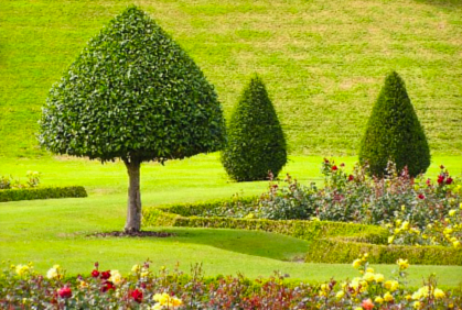 Most popular trees for landscaping pictures with DIY design ideas and DIY plans