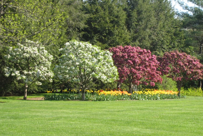 Image result for landscaping with trees