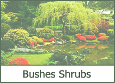 Bushes and Shrubs for Landscaping
