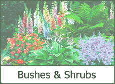 Types of Shrubs and Bushes
