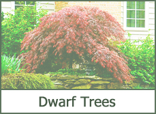 Dwarf Trees for Garden Landscaping