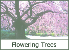 Flowering Trees for Landscaping