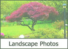 Landscape Photo Gallery