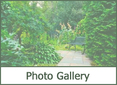Photo Gallery Trees for Landscaping