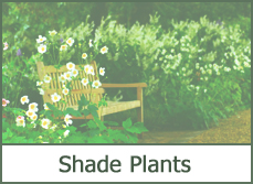 Full Shade Loving Plants