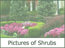 best types of shrubs
