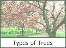 types of trees for landscaping