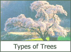 Best Trees for Landscaping