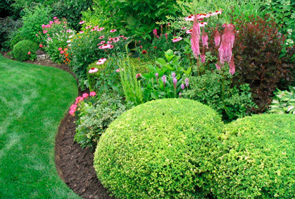 Top 2016 Landscaping With Evergreen Trees And Shrubs Design Ideas Photos Diy Makeovers