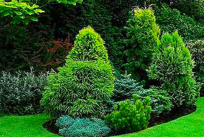 Pictures Of Landscaping With Evergreen Trees And Shrubs Designs Ideas Photos