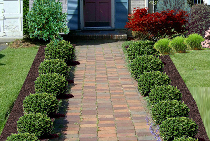 Top 2016 Shrubs And Bushes For Landscaping Pictures Design Ideas Photos Diy Makeovers